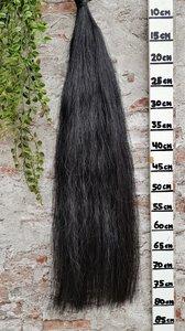 Z-11 Volle zwarte staart