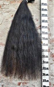 Z-15 Prachtige volle zwarte staart.